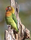 Observation / Ornithologie
