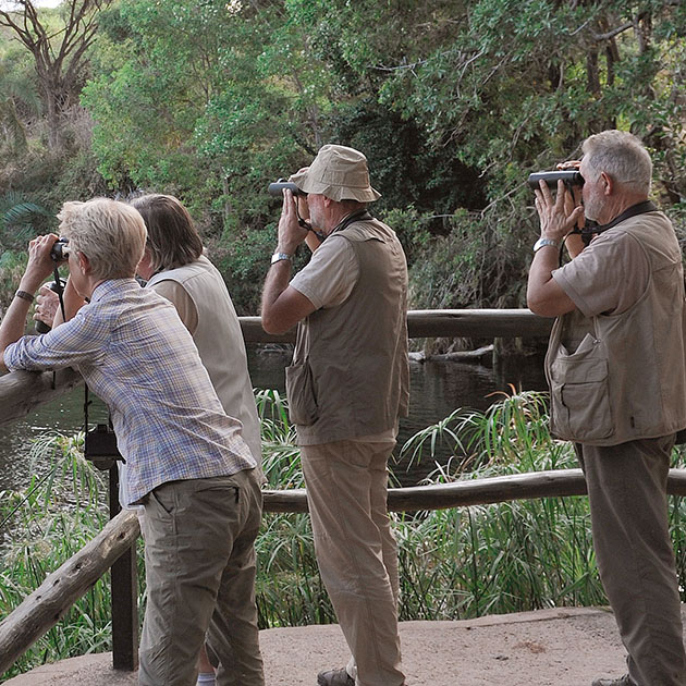 Groupe observation animaux aux jumelles